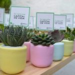 Macetas Materas Personzalizadas Cactus