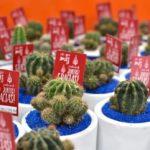 cactus en matera de barro