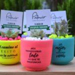Macetas Colores Vivos Mensajes Divertidos Cactus Decoracion