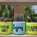 mini cactus en maceta