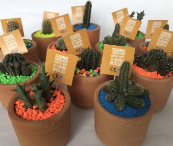 Cactus en Materas Personalizadas