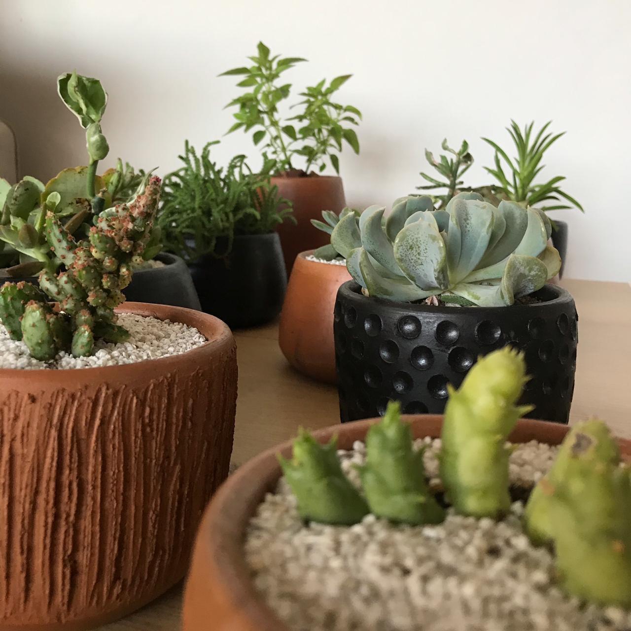 cactus miniatura comprar