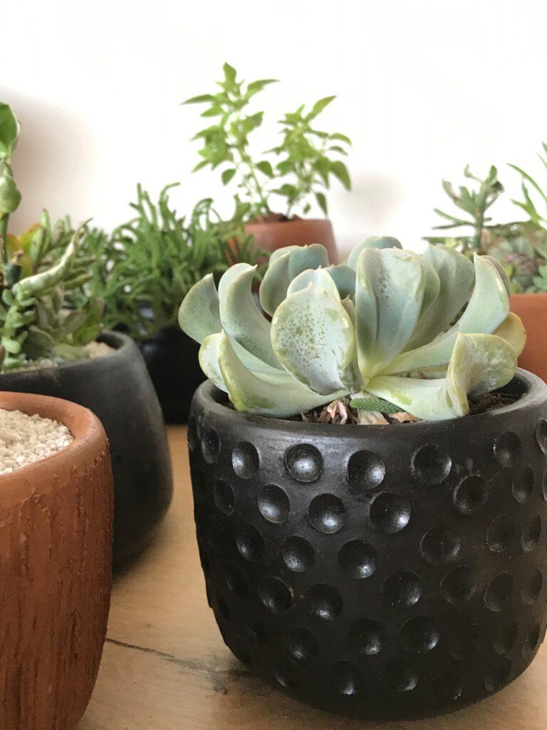 Cactus De Regalo 1