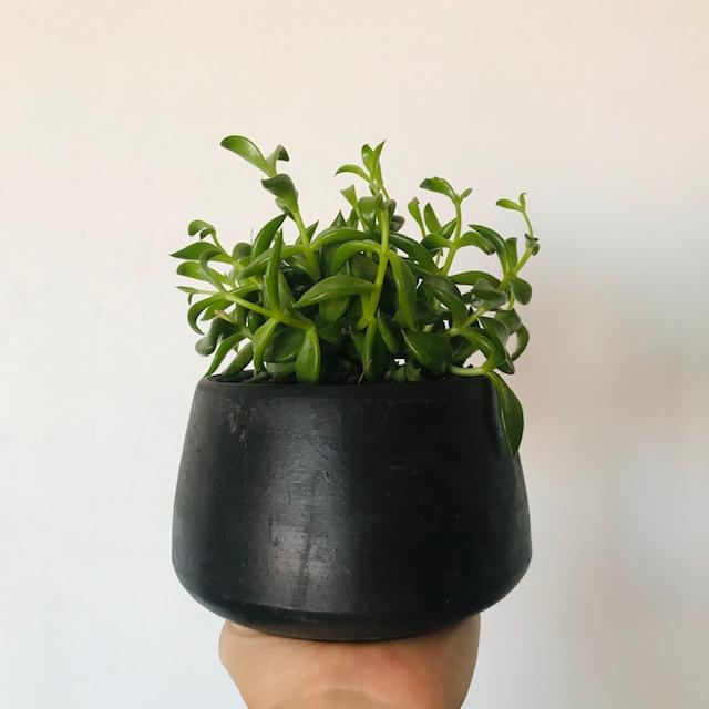 terrarios pequenos en barro