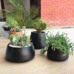 Terrarios En Ceramica Negra